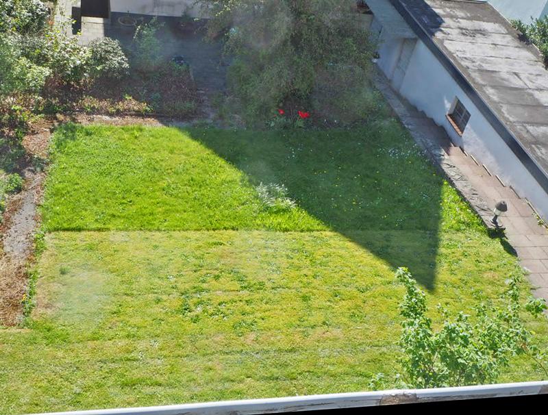 scharf geteilt: Rasen und Wiese