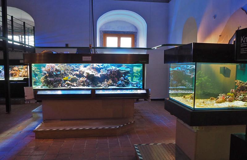 Aquarien im Juramuseum