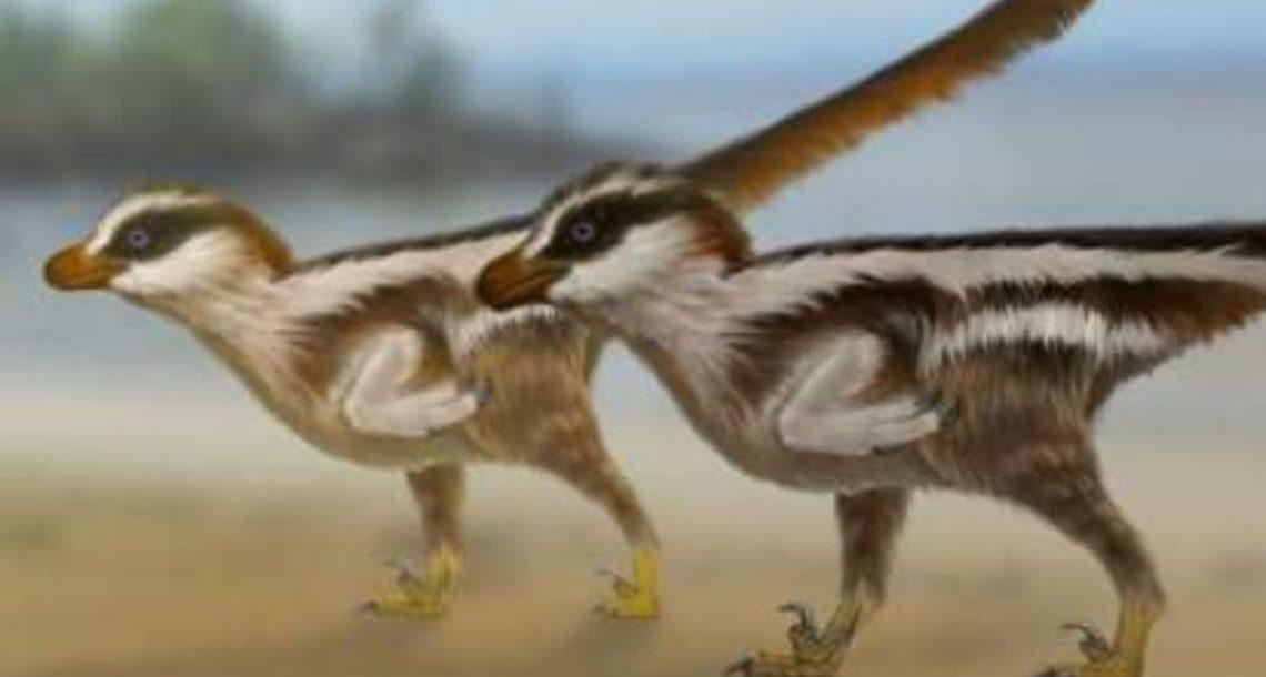Die Spuren wurden von Dinosauriern in der Größe von Spatzen hinterlassen. (Foto: University of Queensland)