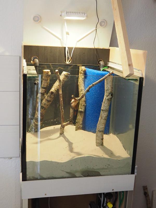 Birken im Sand - im Aquarium