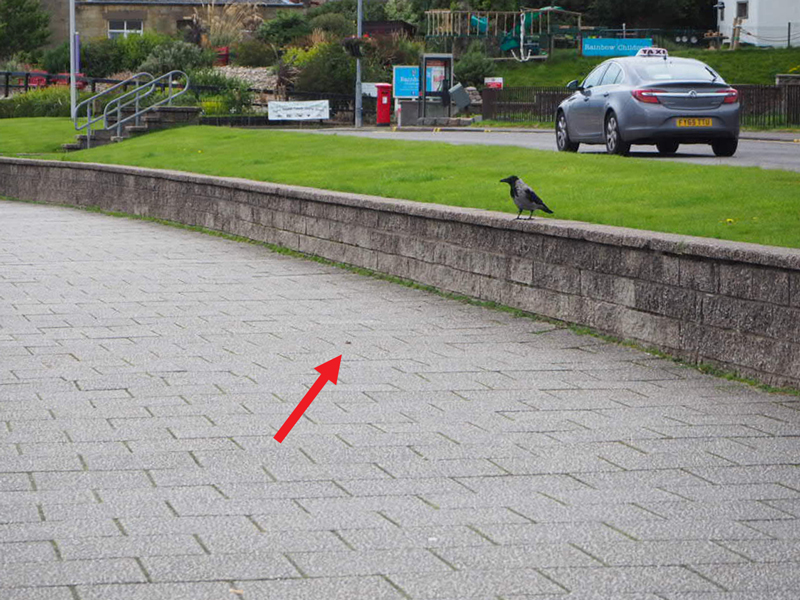 Promenade von Oban, eine Krähe sitzt auf einer niedrigen Mauer und schaut mich an, vor ihr liegt das kaputte Schneckenhaus