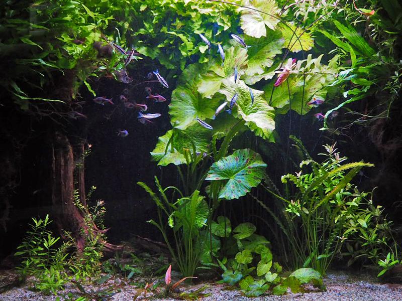 hinterindisches Aquarium