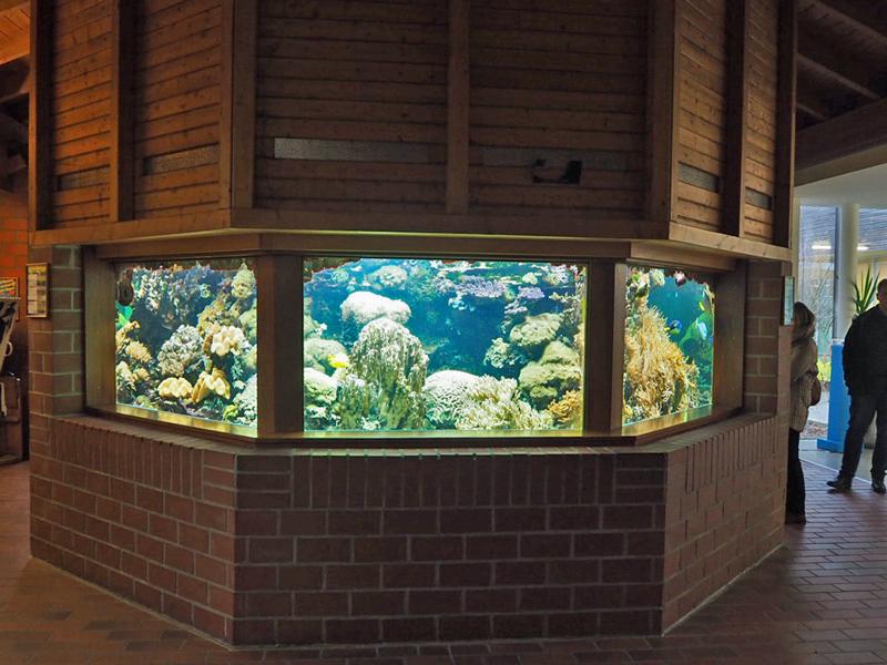 Aquarium mit Korallen