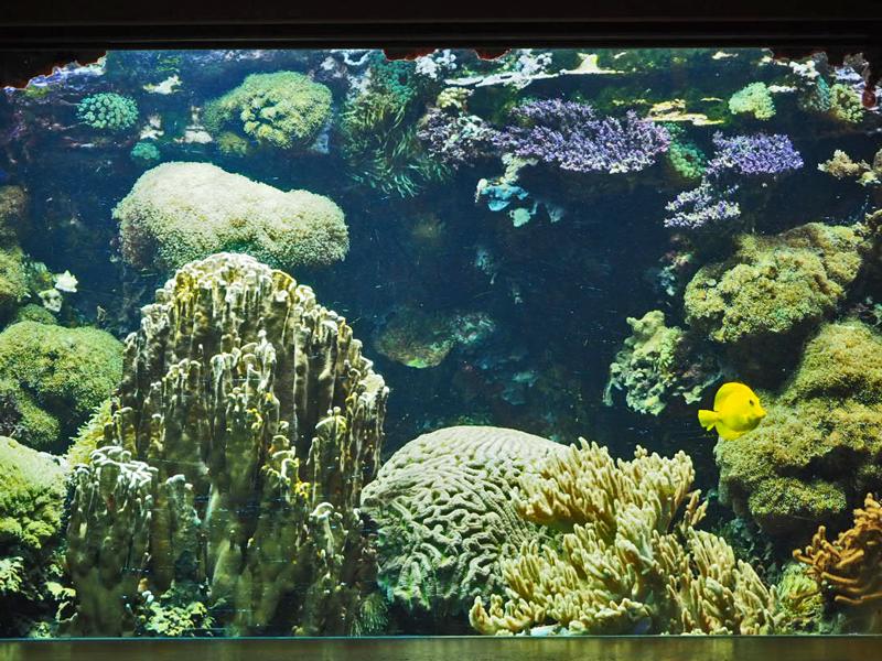Korallenaquarium mit gelbem Fish